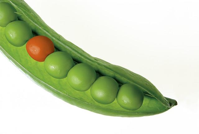 Peas Pod Pea Pod Green Fresh